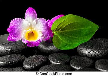 エステ, 背景, の, クローズアップ, 蘭, 花, dendrobium, そして, 緑の葉, 上に, 黒, 禅, 石, 背景, ∥で∥, 露