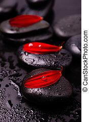 エステ, gerbera, まだ, 石, 花弁, 黒い赤, 生活