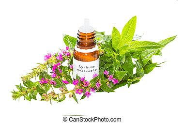 エッセンシャルオイル, から, ∥, lythrum, salicaria, 植物