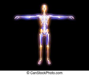 エネルギー, 体