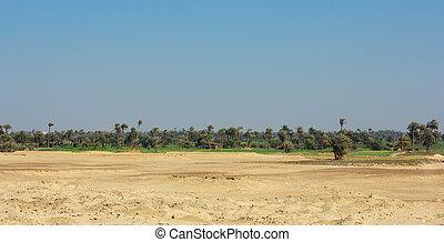 オアシス, アフリカ
