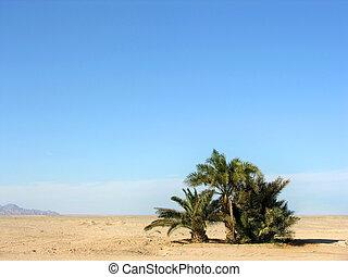 オアシス, 中に, 砂漠