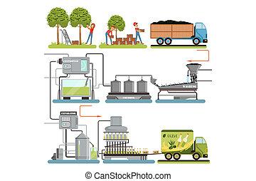 オイル, ベクトル, 終えられた, 消費者, パッキング, プロダクト, オリーブ, 段階, プロセス, 収穫する, 出産, イラスト, 生産, オリーブ