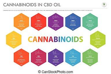 オイル, cbd, cannabinoids, infographic, ビジネス, 構造, 横, フォーミュラ