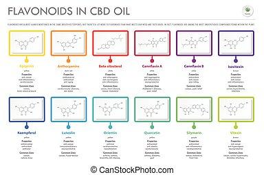 オイル, cbd, flavonoids, infographic, ビジネス, 構造, 横, フォーミュラ
