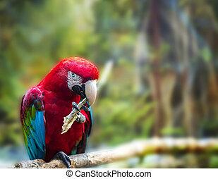オウム, 赤, red-and-green, ara, macaw, chloroptera, 大きい, ブランチ, ...