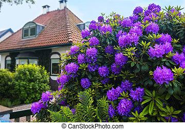 オランダ語, 春, 庭