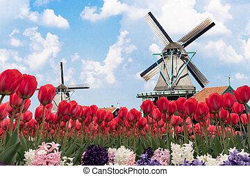 オランダ語, touristic, 景色, 年, ∥そうするかもしれない∥, 花, すべて, 3月, pittoresque, 国, 画像的, あらゆる, のまわり
