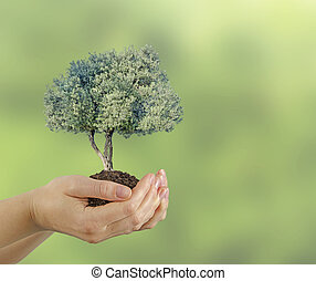 オリーブの木, 贈り物, 手