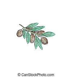 オリーブの枝