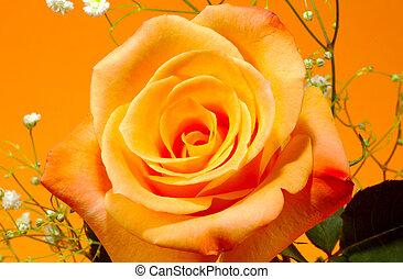 オレンジローズ, 3