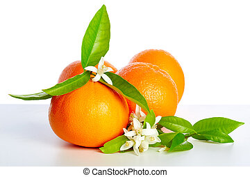 オレンジ, ∥で∥, オレンジ花, 花, 白