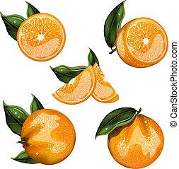 オレンジ, フルーツ, セット, 隔離された, ベクトル