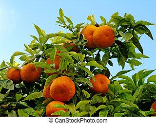 オレンジ, 上に, ∥, 木