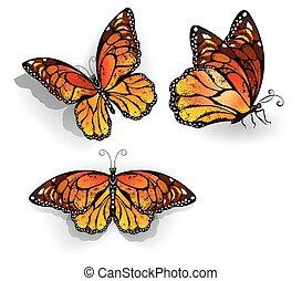 オレンジ, 君主, 蝶, セット