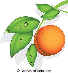 オレンジ, 桃