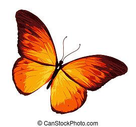 オレンジ, 白, 隔離された, 背景, 蝶