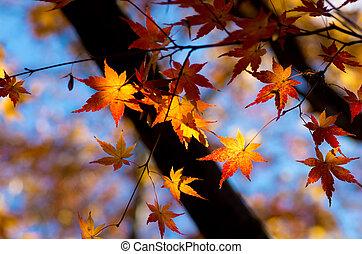 オレンジ, 葉, 鮮やか, かえで