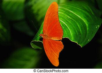 オレンジ, 飛ぶ, 蝶