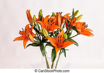 オレンジ, lilly, whote, 隔離された, 花