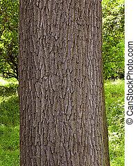 オーク, 樹皮