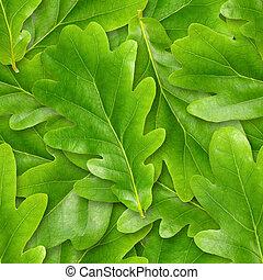 オーク, leafs, seamless, バックグラウンド。
