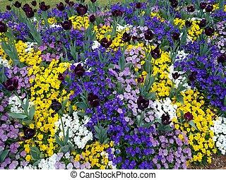 オーストラリア, 庭, queensland, 花, 植物, ディスプレイ