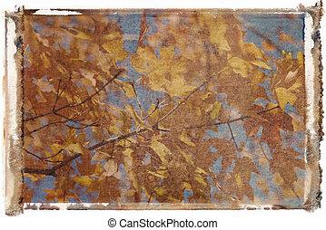 カエデの木, 中に, 秋, color.