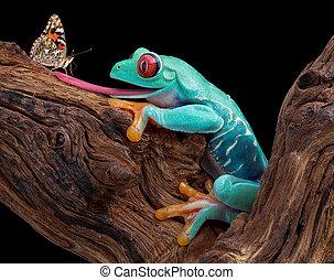 カエル, つらい, へ, 捕獲物, 蝶