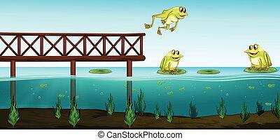 カエル, 池, 3