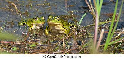 カエル, 緑