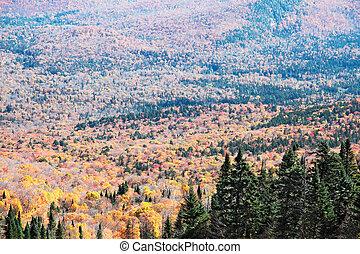 カナダ, 季節, ケベック, mont-tremblant, 秋