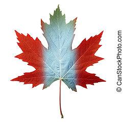 カナダ, 葉, かえで