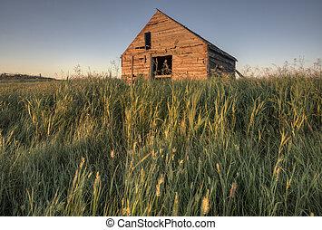 カナダ, 農家, 捨てられた, サスカチェワン