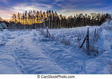 カバーされた, 上に, 雪, 日の出, 森林