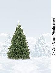 カバーされた, 木, 現場, クリスマス, 雪