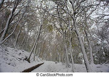 カバーされた, 森林, 雪