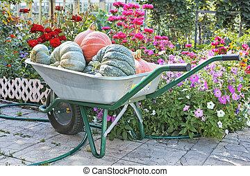 カボチャ, 庭, 一輪手押し車