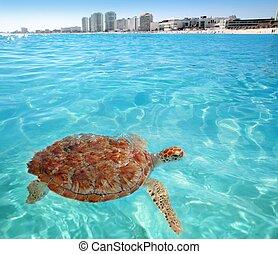 カメ, カリブ海, cancun, 表面, 緑, 海