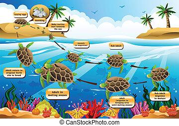 カメ, 生活, 海, 周期