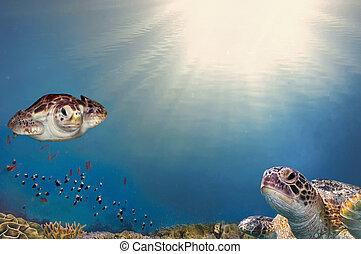カメ, 砂洲, 上に, の上, 海, 終わり, 珊瑚