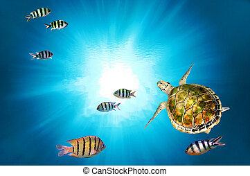 カメ, 緑, 水泳