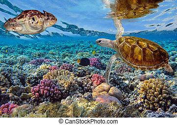 カメ, 青, 水泳, 緑, 海洋