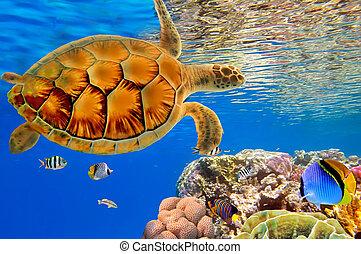 カメ, swiming, 砂洲, 上に, 緑, 海, 珊瑚