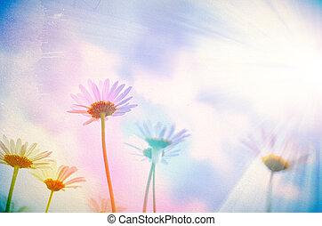 カモミール, 型, flowers., wilde, レトロ, 背景, 花