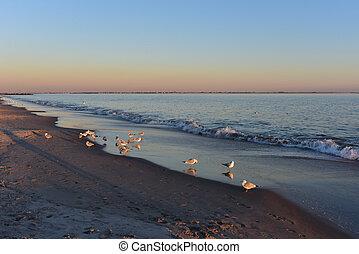 カモメ, そして, 日没, 上に, coney 島, 浜