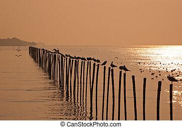 カモメ, そして, 日没, 中に, 海, thailand.