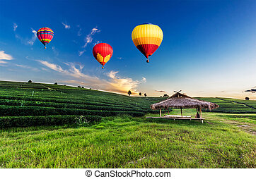 カラフルである, お茶, 上に, 飛行, プランテーション, 日没, 風船, 温風, 風景