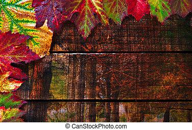 カラフルである, ぬれた, 紅葉, 取り決められた, 上に, 古い, 木製のテーブル