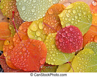 カラフルである, アスペンリーフ, ∥で∥, 雨滴